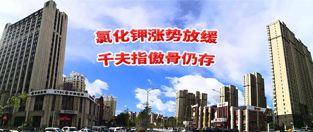 【中肥通讯社】氯化钾涨势放缓 千夫指傲骨仍存
